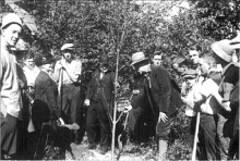 Edmond Meany planting more trees