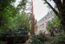UW Facilities crew removing debris from lightning struck tree